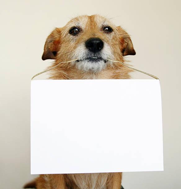Dog sat down with a blank sign between its teeth picture id151548322?b=1&k=6&m=151548322&s=612x612&w=0&h=zynucnc6vsluaqou7evlwt2g a9uoigllu4pod6 4z4=