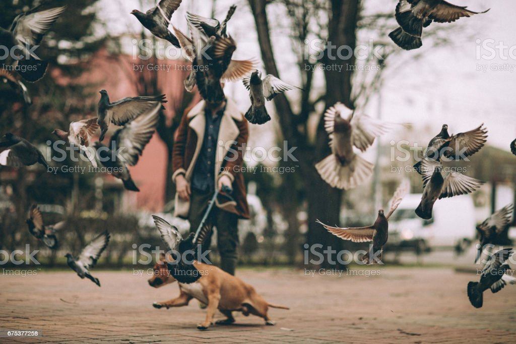 Dog scares the pigeons on the square stock photo