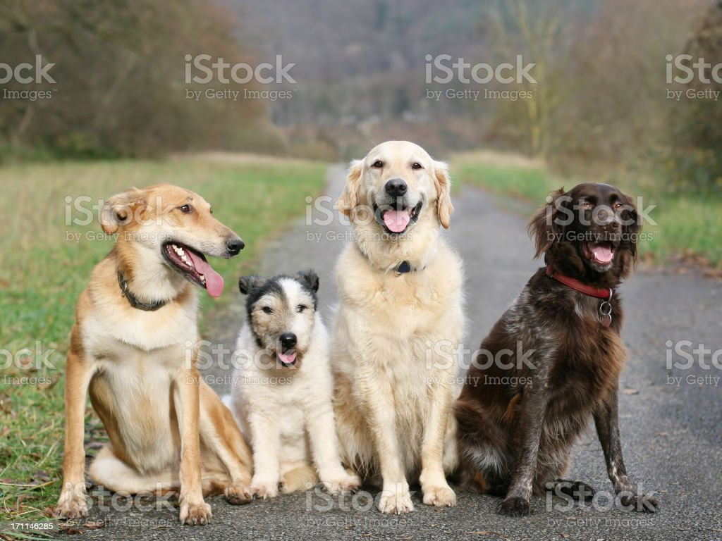 Dog School stock photo