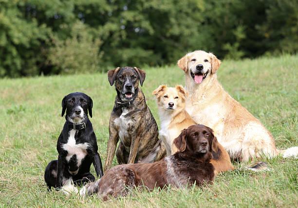 Dog School stock photo