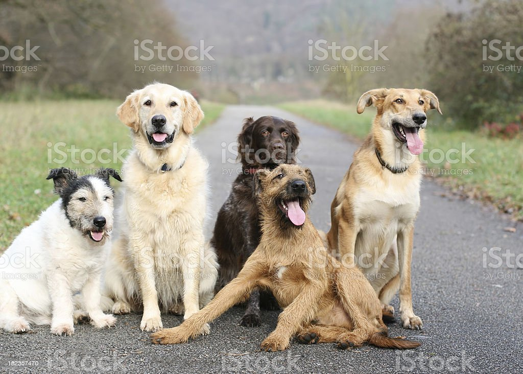 Dog School royalty-free stock photo