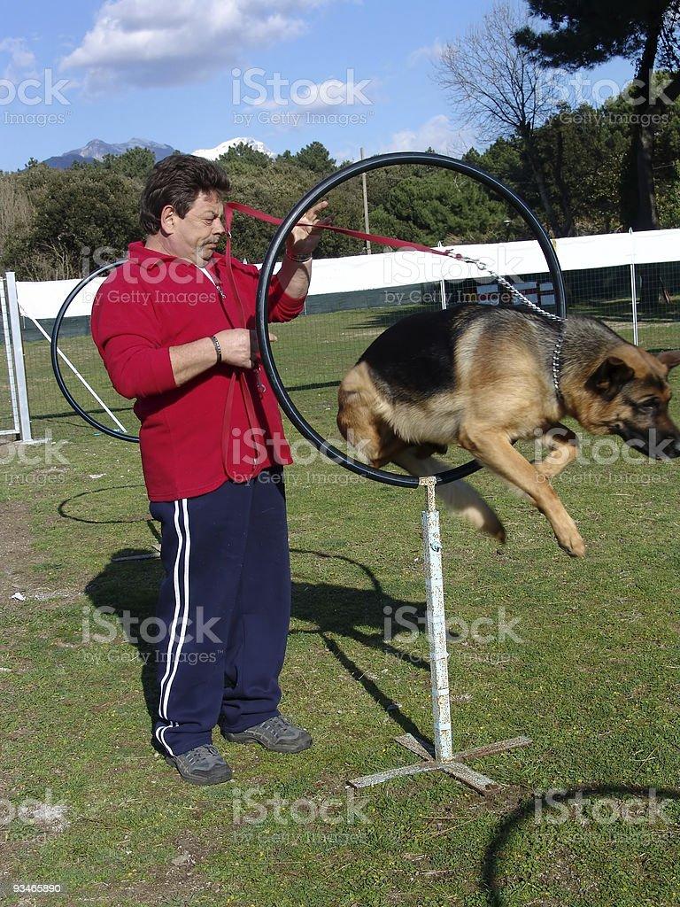 dog school royalty-free stock photo