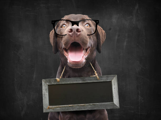 Dog school teacher with nerd glasses against blackboard with empty sign board as collar around his neck with space for own text stock photo