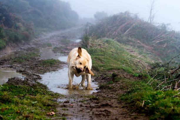 Dog shakes in a puddle picture id1144989090?b=1&k=6&m=1144989090&s=612x612&w=0&h=ogf8y0clmw8me8xtzqfbhi25y2hgmsifpxnw2fson 0=