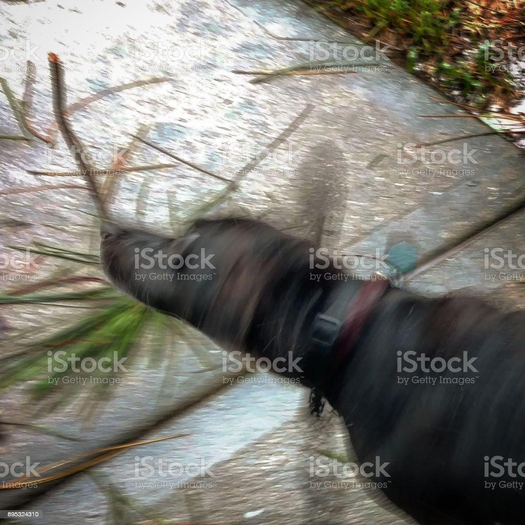 Dog Shaking His Head in the Rain stock photo