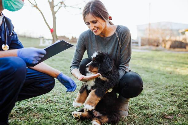 Dog shelter picture id1203597799?b=1&k=6&m=1203597799&s=612x612&w=0&h=nf3ndgy b9tnwvb6rm82paewvu7bmonqwfw l2ouih4=