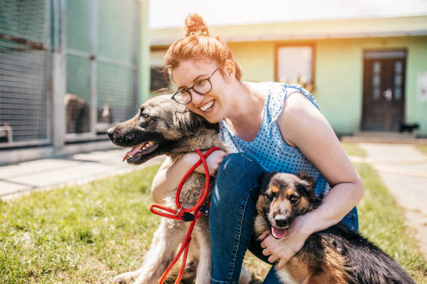Dog shelter Young adult woman working and playing with adorable dogs in animal shelter sheltering stock pictures, royalty-free photos & images
