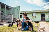 istock Dog shelter 1250060339