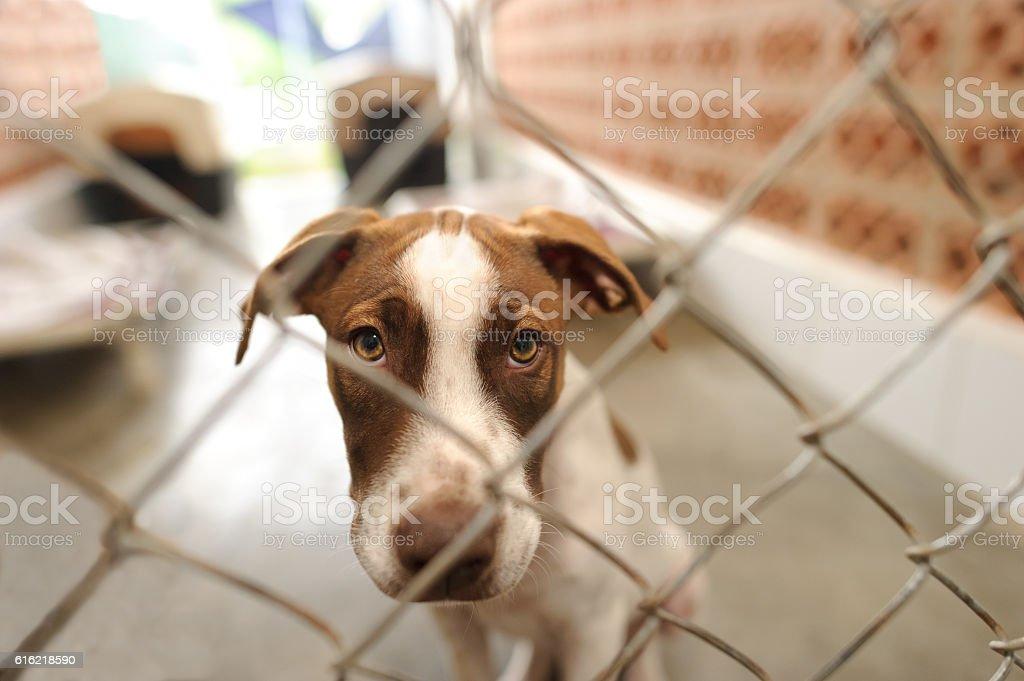 Dog Shelter stock photo
