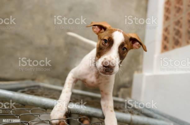 Dog shelter picture id853719886?b=1&k=6&m=853719886&s=612x612&h=hsniu7qwcew7zxtbsrcvdbxruln 16bao9eue9crh6o=