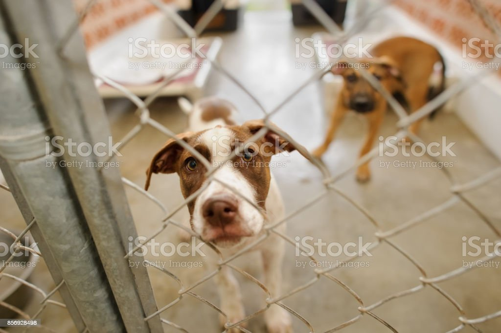 Hund Shelter – Foto