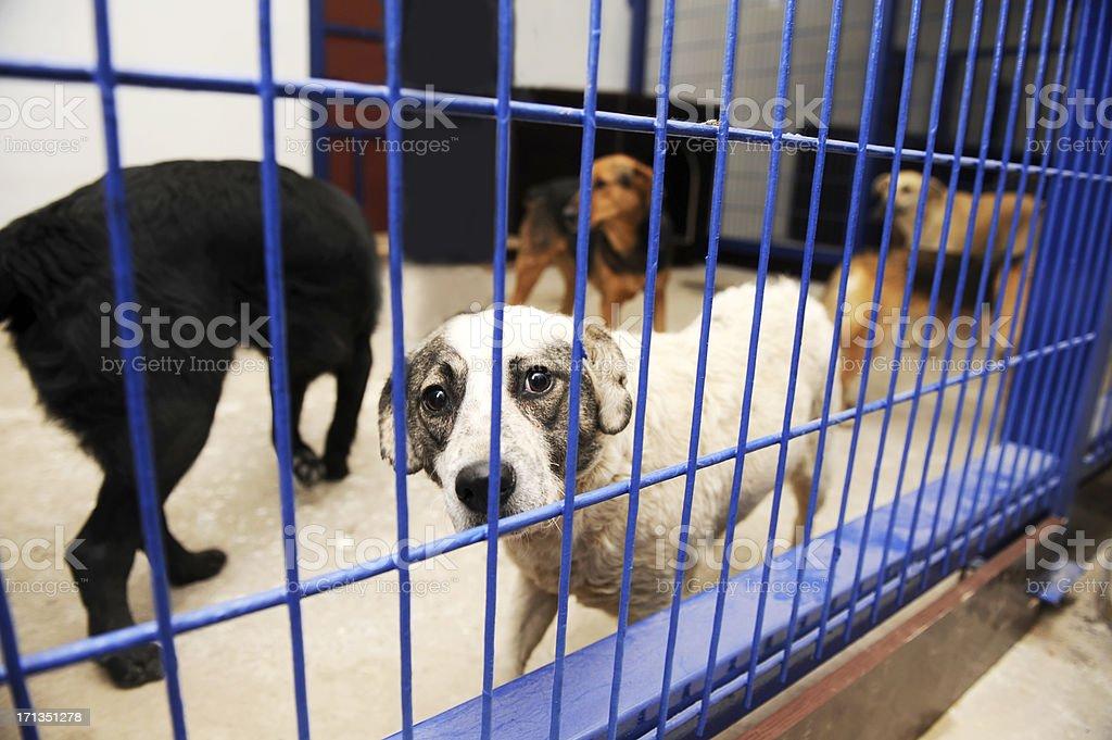 Dog shelters stock photo