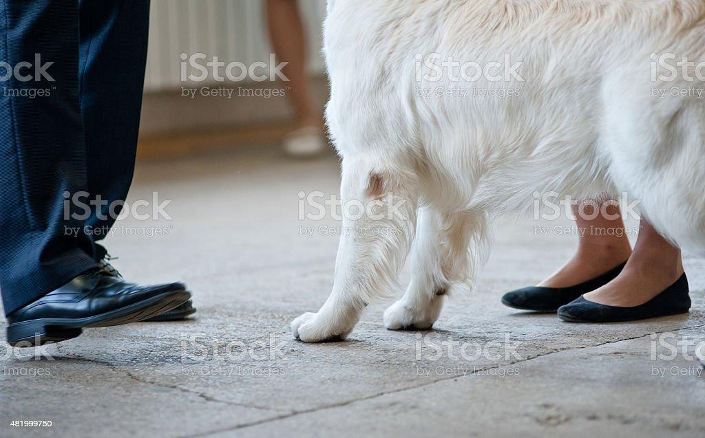 Dog show details stock photo