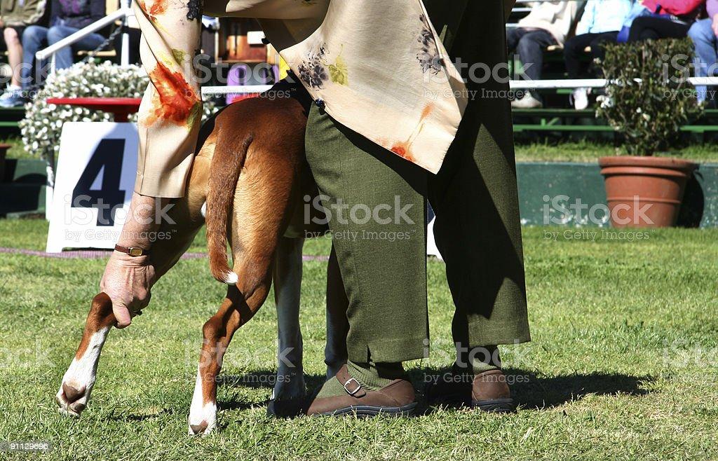 Dog Show stock photo