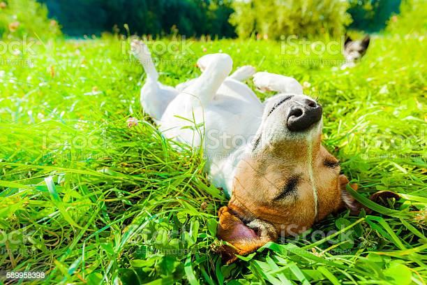 Dog siesta at park picture id589958398?b=1&k=6&m=589958398&s=612x612&h=kf6vdr8cp1q8l uw2qwdtsoglyigg0y9ygbxorwxkg0=
