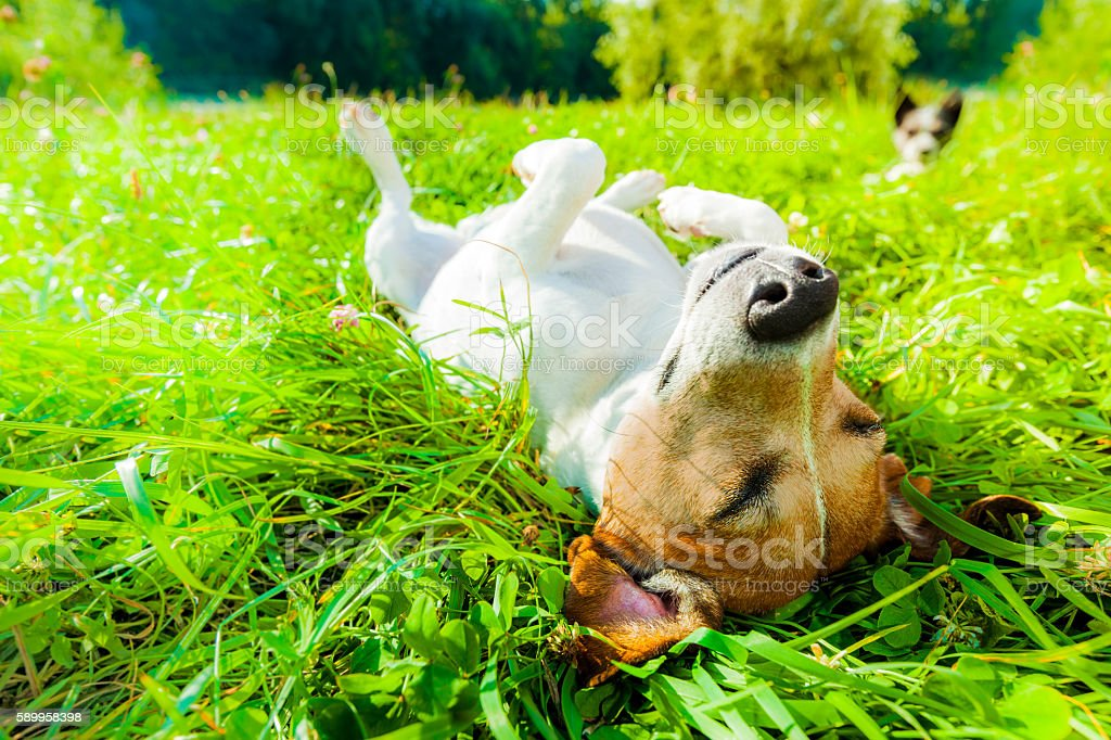 dog siesta at park stock photo