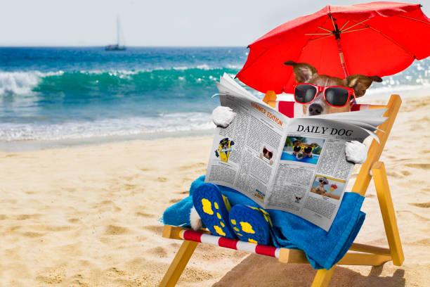 dog siesta on beach chair - newspaper beach stockfoto's en -beelden
