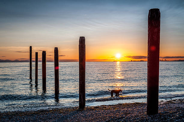 dog silhouette at sunset in Point Roberts stock photo