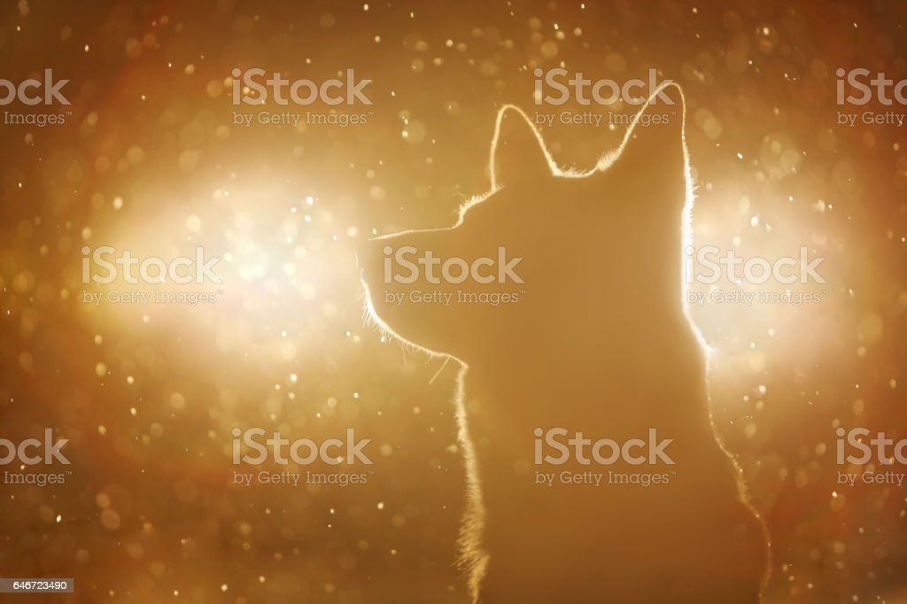 Dog silhouette in the headlights stock photo