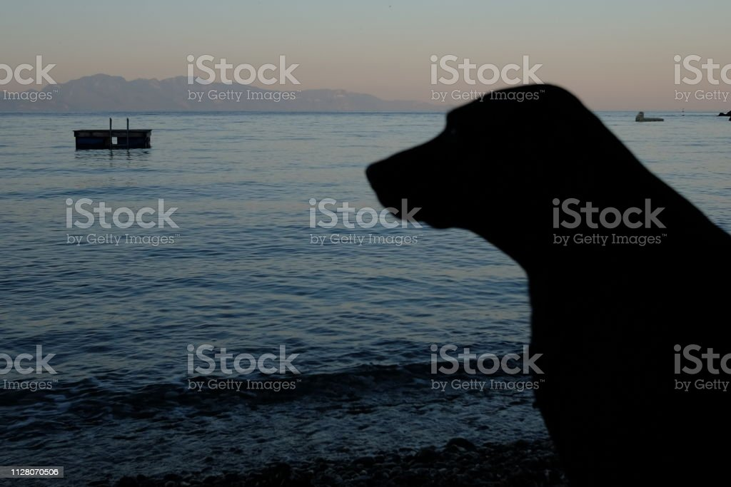 A local lake and dog