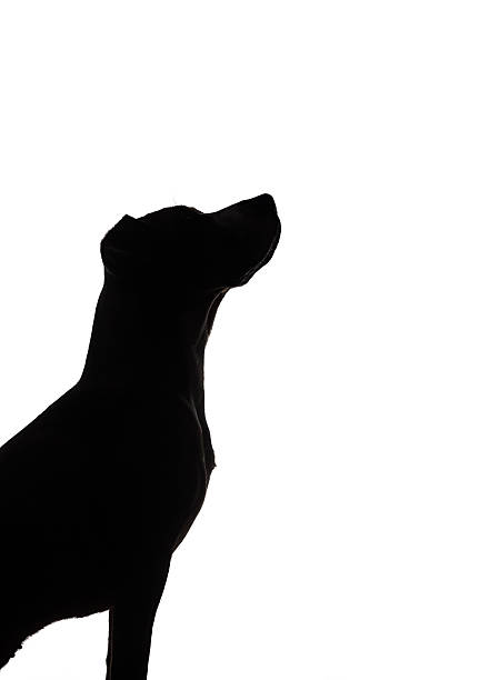 Dog silhouette on white background picture id626208620?b=1&k=6&m=626208620&s=612x612&w=0&h=hbe6kyfyyyk9hcshspecyvan0m22z5hppttc74vyffq=