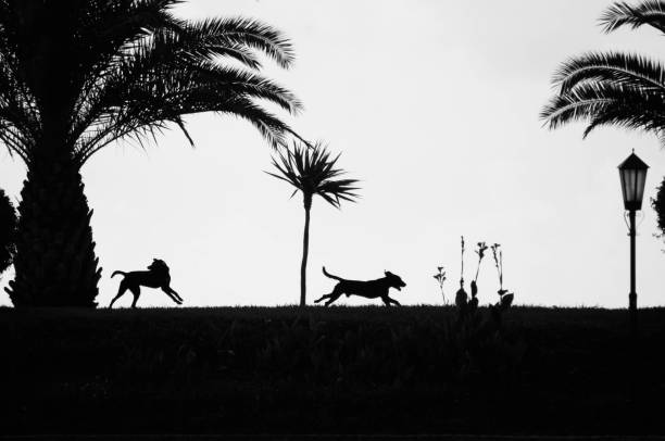 dog silhouette - tree logo stock photos and pictures