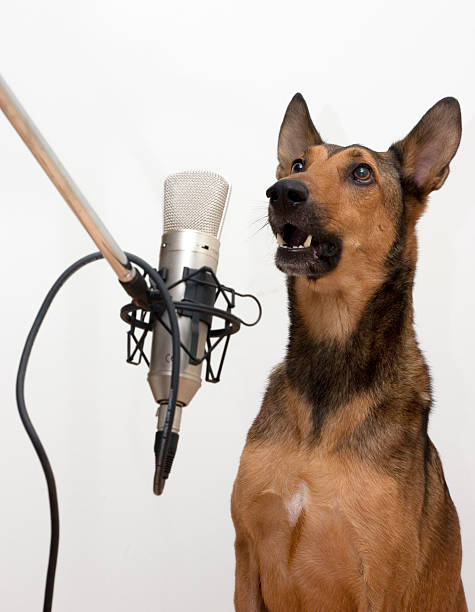 Dog Singing in Microphone stock photo