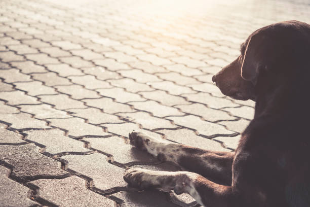Dog sit on street homeless dog picture id821783666?b=1&k=6&m=821783666&s=612x612&w=0&h=wdzh5fzj8dklkdheatjypgxdjflfrbnh4roabdxwfya=