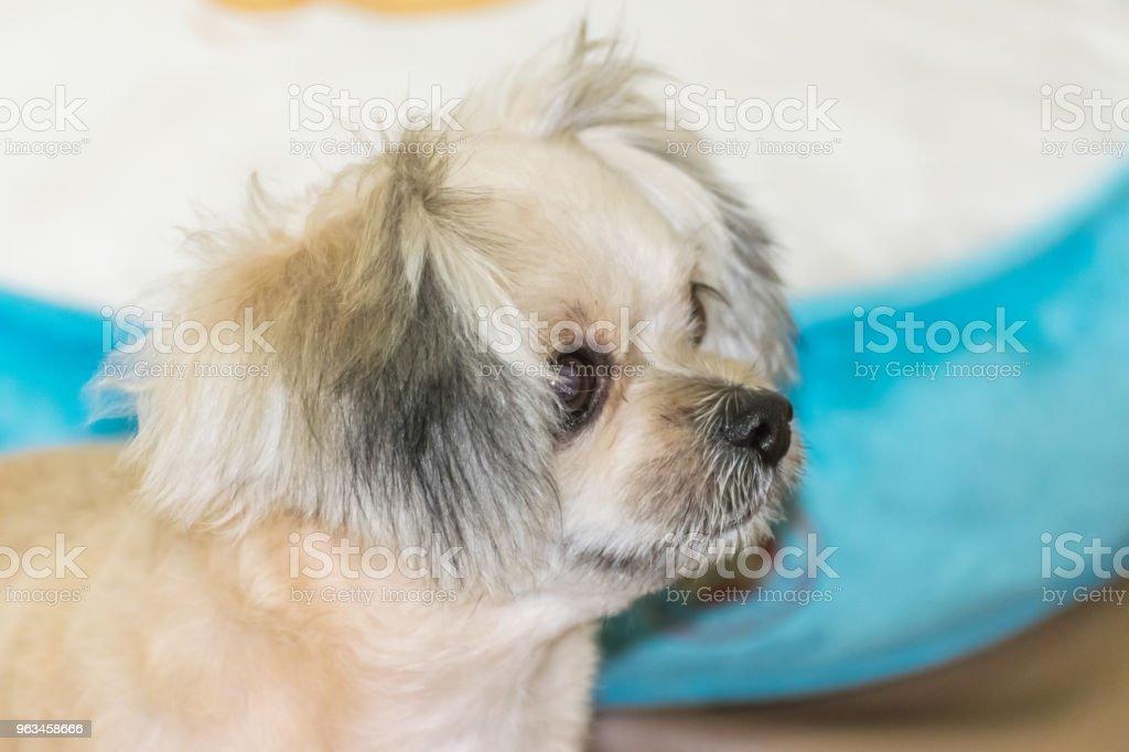 Köpek oturan ve bir şey de ne zaman seyahat etmek seyir - Royalty-free Akıllılık Stok görsel