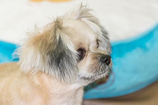 Köpek Oturan Ve Bir Şey De Ne Zaman Seyahat Etmek Seyir Stok Fotoğraflar & Akıllılık'nin Daha Fazla Resimleri