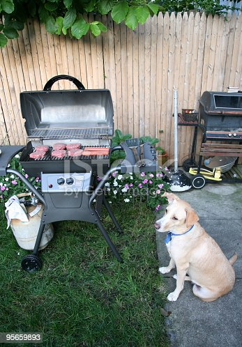 istock Dog Sitting at Barbecue 95659893