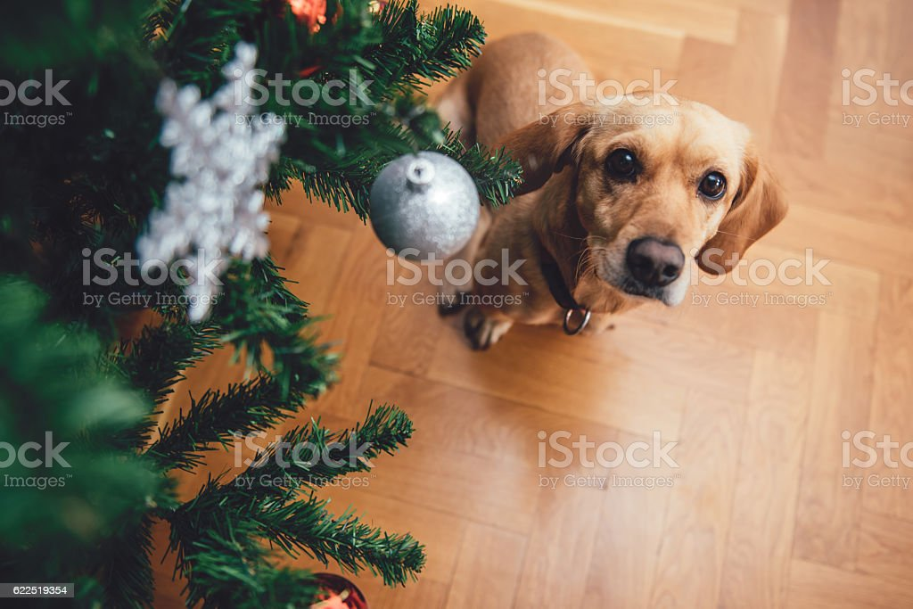 Dog sitting by the christmas tree stock photo