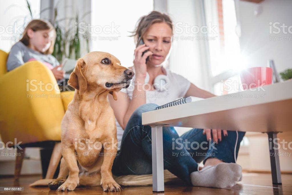 Dog sitting by the woman zbiór zdjęć royalty-free