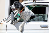 istock Dog sitting in a car 909753312