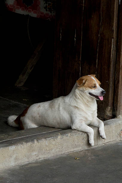 Dog sitting in a doorway. stock photo