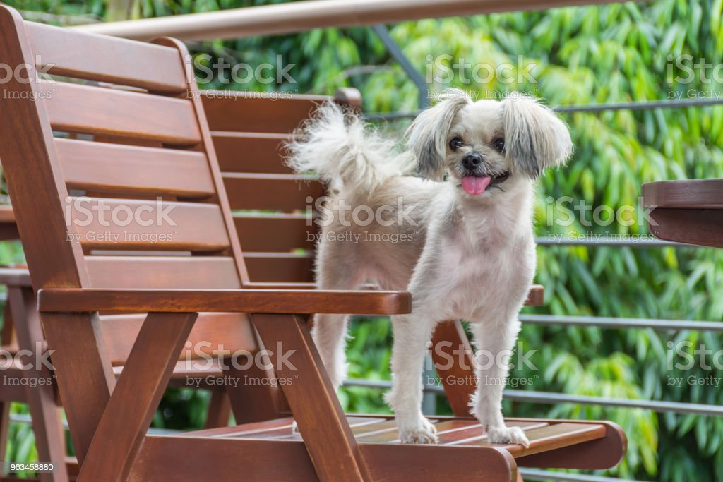 Seyir bir şey kafede oturan köpek - Royalty-free Ahşap Stok görsel