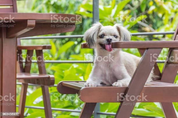 Perro Sentado En La Cafetería Mirando Algo Foto de stock y más banco de imágenes de Aire libre