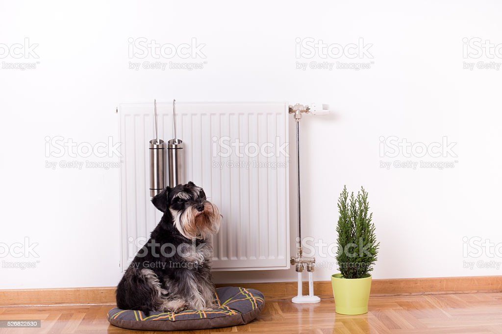 Dog sitting in front of heater stock photo