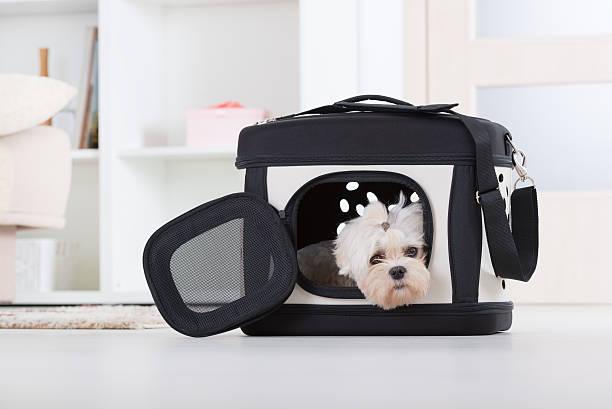 Dog sitting in seinem transporter – Foto