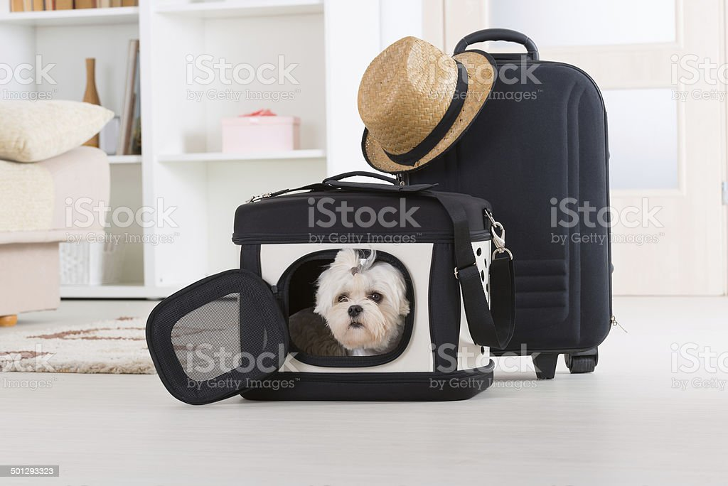 Dog sitting in seinem transporter – Foto