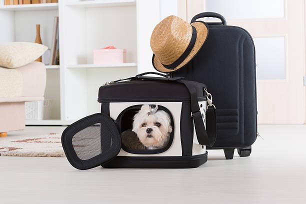 dog sitting in seinem transporter - hunde träger stock-fotos und bilder