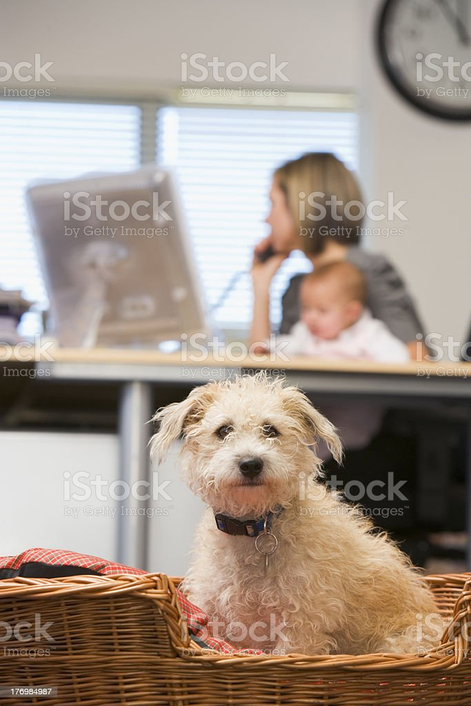 Dog sitting in home office with woman holding baby royalty-free stock photo