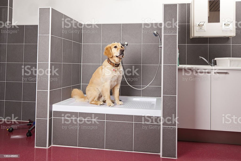 dog sitting in shower at veterinarian royalty-free stock photo