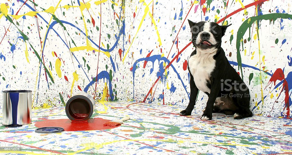 A dog sitting in the middle of a paint splattered room  royalty-free stock photo