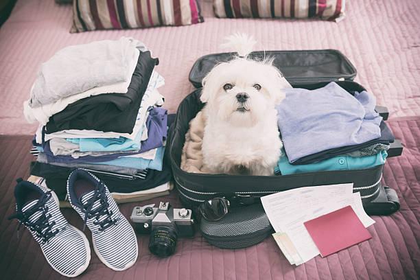 chien assis dans la valise - valise humour photos et images de collection