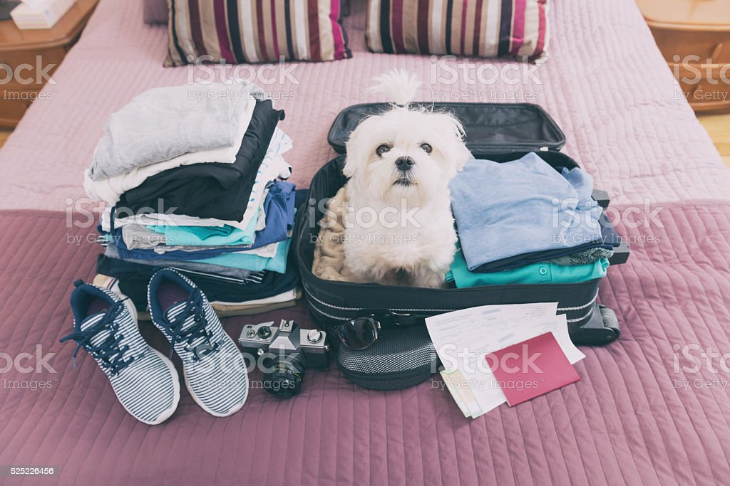 Dog sitting in the suitcase royalty-free stock photo