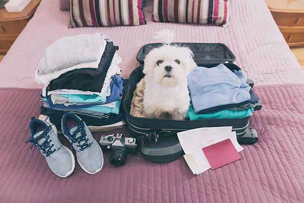 Perro sentado en su maleta - foto de stock