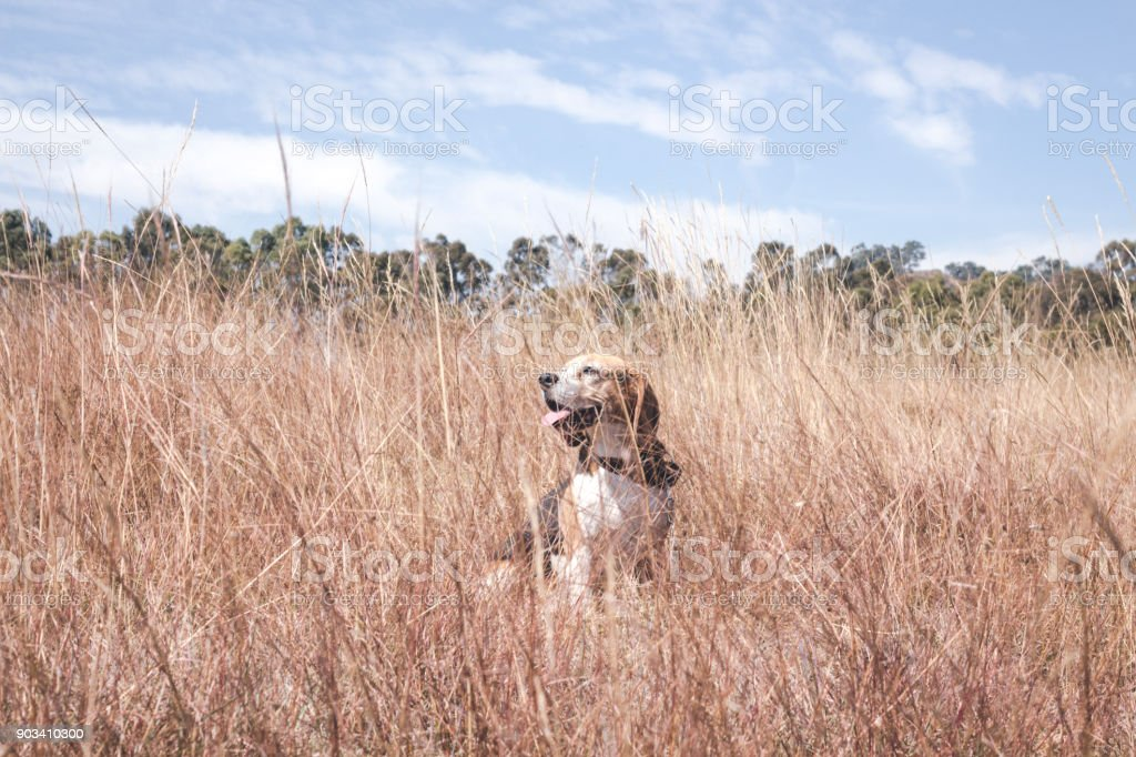 Dog sitting in the the middle of the meadow stock photo
