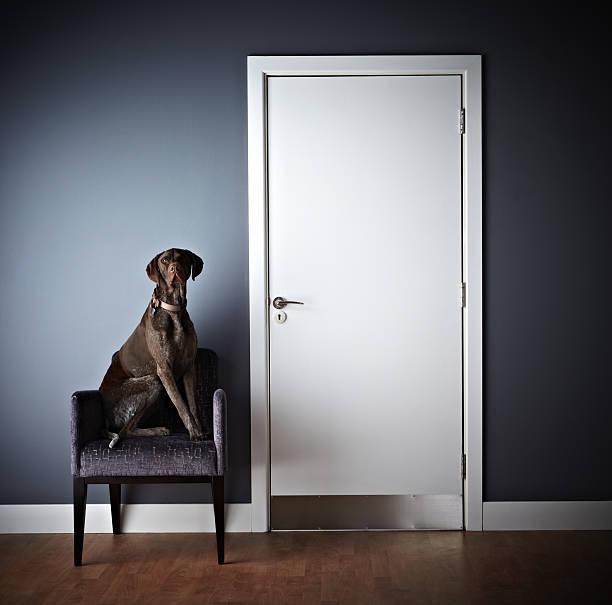 hund sitzend auf einem stuhl und blick in die kamera - hundeplätze stock-fotos und bilder