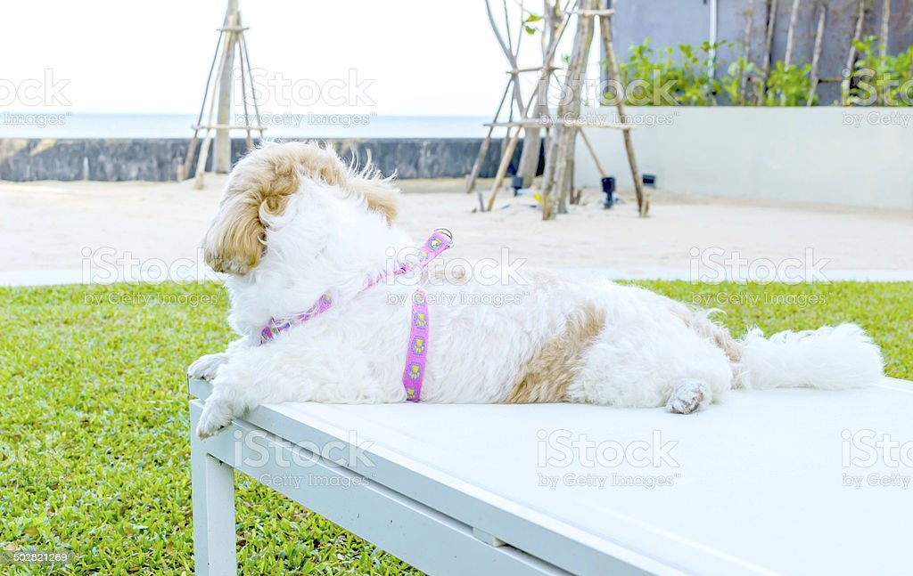 dog sitting on a deck chair stock photo